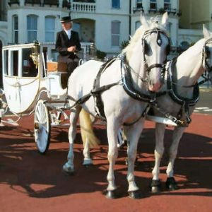wedding cinderella horse and carriage for hire
