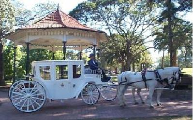 cinderella wedding horse and carriage for hire sydney