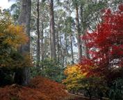 sydney garden & art tour