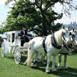 Marriage Proposal Ideas - Wedding Horse And Carriage For Hire