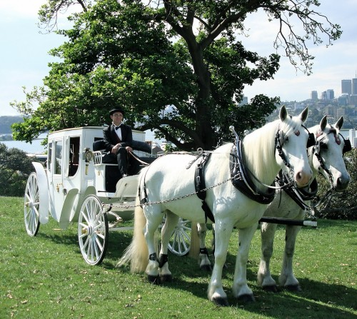 horse and carriage for wedding proposal or wedding day