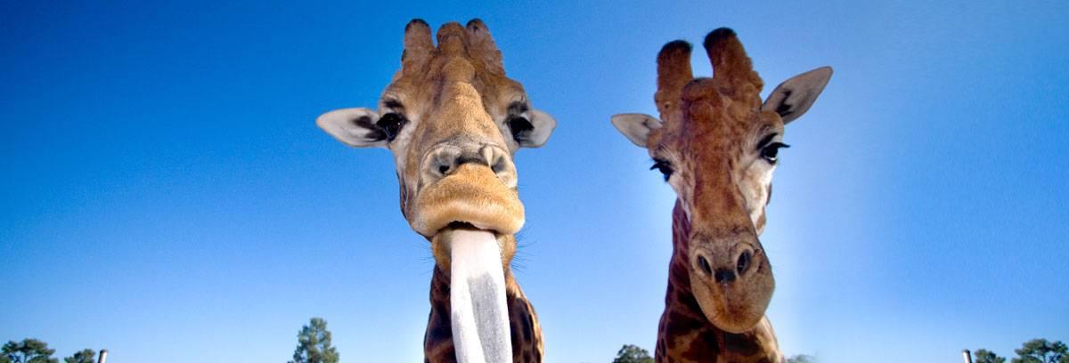 accessible zoo tour sydney