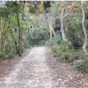 accessible nature hike sydney gum tree